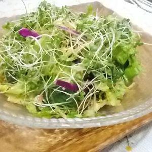 簡単!チョレギサラダ